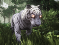 WhiteTigerPet1.png