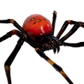 Icon pet Spider Widow Red.png