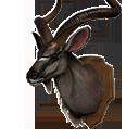 捻角羚头战利品