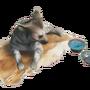 Emberlight pet stripedhyena.png