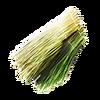 Fibre végétale