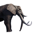 Icon ElephantPet.png