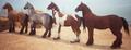 Basehorses2.png