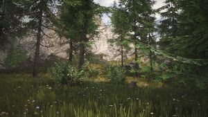 Biomes Forest Scene.jpg