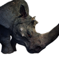 Icon pet RhinoPet King.png