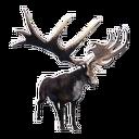 Taxidermied Elk King