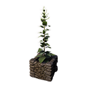 Decorative Planter (Leavening)