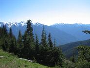 NW alpineforest