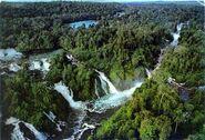 SW rainforest