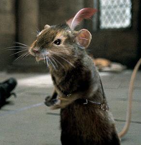 Mouse narnia.jpg