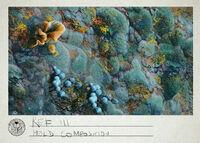 Ref III Mold Composition