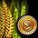 Raise agriculturists' salary