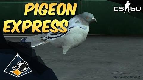 CS GO - Pigeon Express