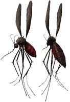 Mosquito ingame mdl