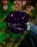 Plant food level icon