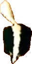 Crash Bandicoot Skunk