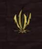 Sawgrass (d).png
