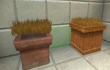 Creativerse savannah tallgrass on pots but not in pots 2018-07-02 15-15-24-31.jpg