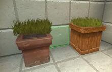 Creativerse tallgrass on pots but not in pots 2018-07-02 15-15-37-03.jpg