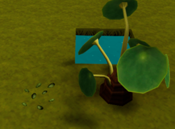 Mirror grass seed and plant.png