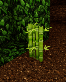 Wild bamboo jungle.png