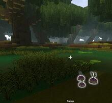 Creativerse Turnip in Swamp53775.jpg