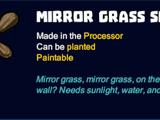 Mirror Grass Seeds