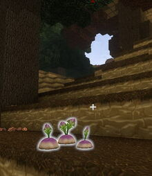 Creativerse Turnips Forest tundralike300.jpg