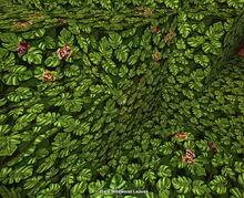 Creativerse dark wildwood leaves with natural flowers 2019-06-03 11-15-35-35.jpg