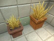 Creativerse shrubs in pots 2018-07-02 15-13-57-31.jpg