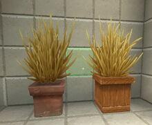 Creativerse shrubs on pots but not in pots 2018-07-02 15-15-52-11.jpg