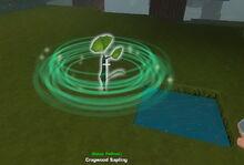 Creativerse saplings fertilized001.jpg