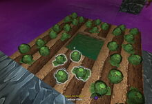 Creativerse lettuce sprouts heads 2017-08-11 21-51-16-53.jpg