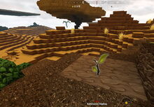 Creativerse sapling on dirt too hot 2019-04-23 10-12-16-1511.jpg