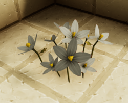 Canvas flowers.png
