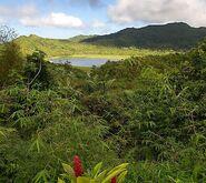 Selva Caribeña Palmero