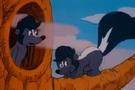 Skunk cc