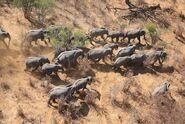 Elephants-GEC.jpg.662x0 q70 crop-scale