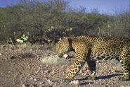 Jaguar Reserve
