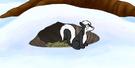 Skunk ctbrdpy