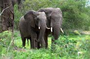 27-African-elephant-307161494-1024x682