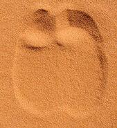 300px-Dromedary Footprint in Sand