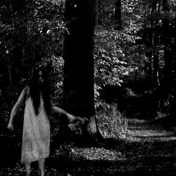 Der verfluchte Wald