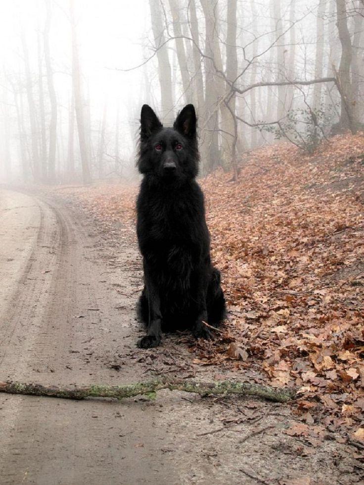 A Dog Named Grim