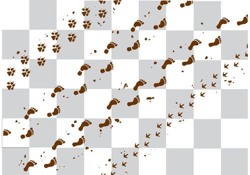 Muddy footprints.jpg