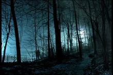 Silhouette-night-shadow-forest.jpg