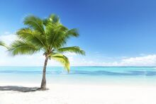 1200-5282-palm-trees-photo1.jpg