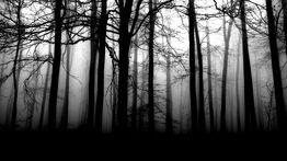 Wald 2-0.jpg