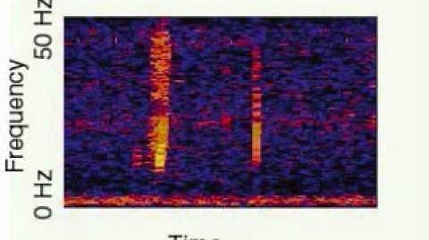 Niezidentyfikowane dźwięki oceanu