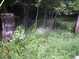 I Found a Digital Camera in the Woods